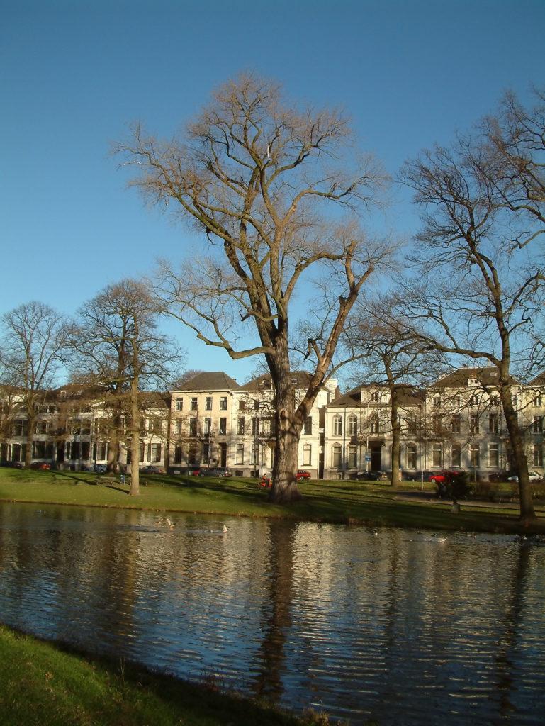 Small lake in Arnhem park